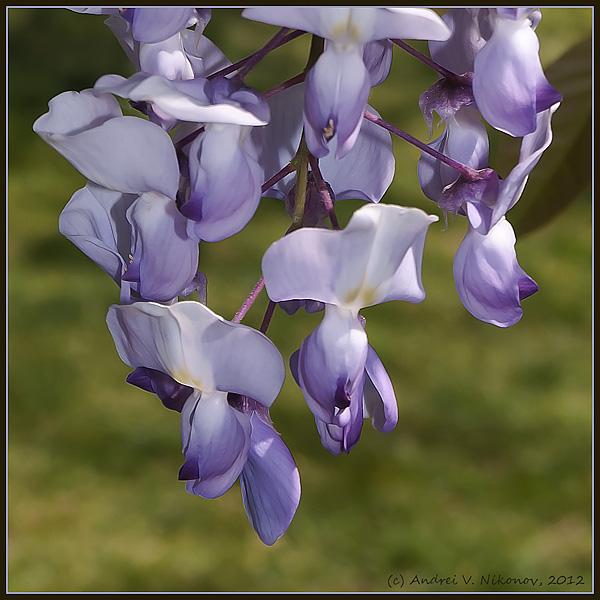 """фото """"* * *"""" метки: природа, макро и крупный план, цветы"""