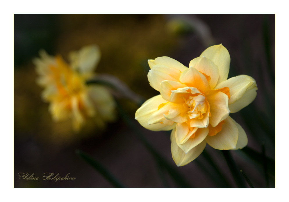 "фото ""Моя весна"" метки: природа, цветы"