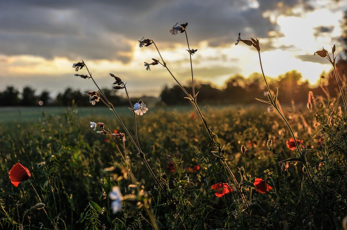 """photo """"In die geheue van B."""" tags: landscape, spring, sunset"""