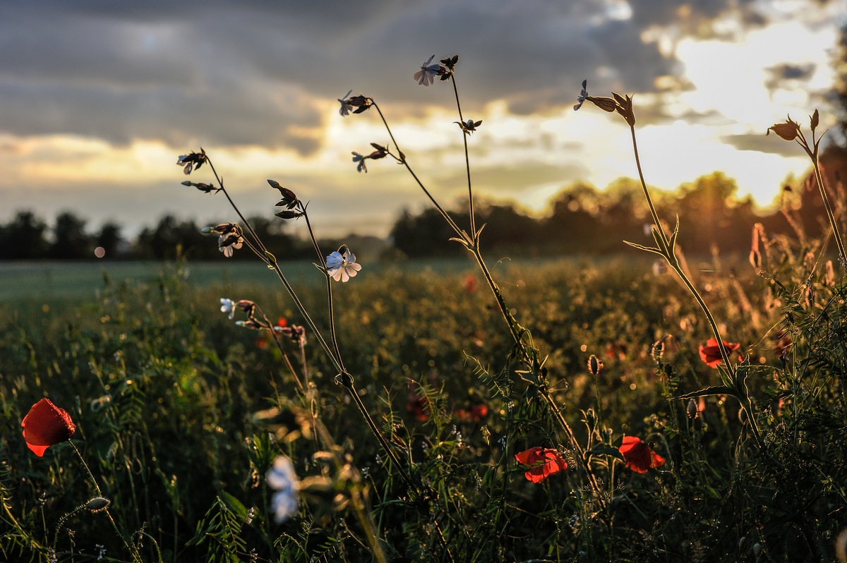 "фото ""In die geheue van B."" метки: пейзаж, весна, закат"