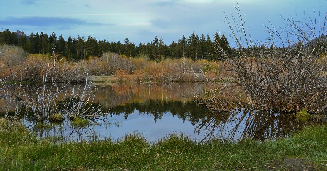"""фото """"вечерний пруд ..."""" метки: пейзаж,"""