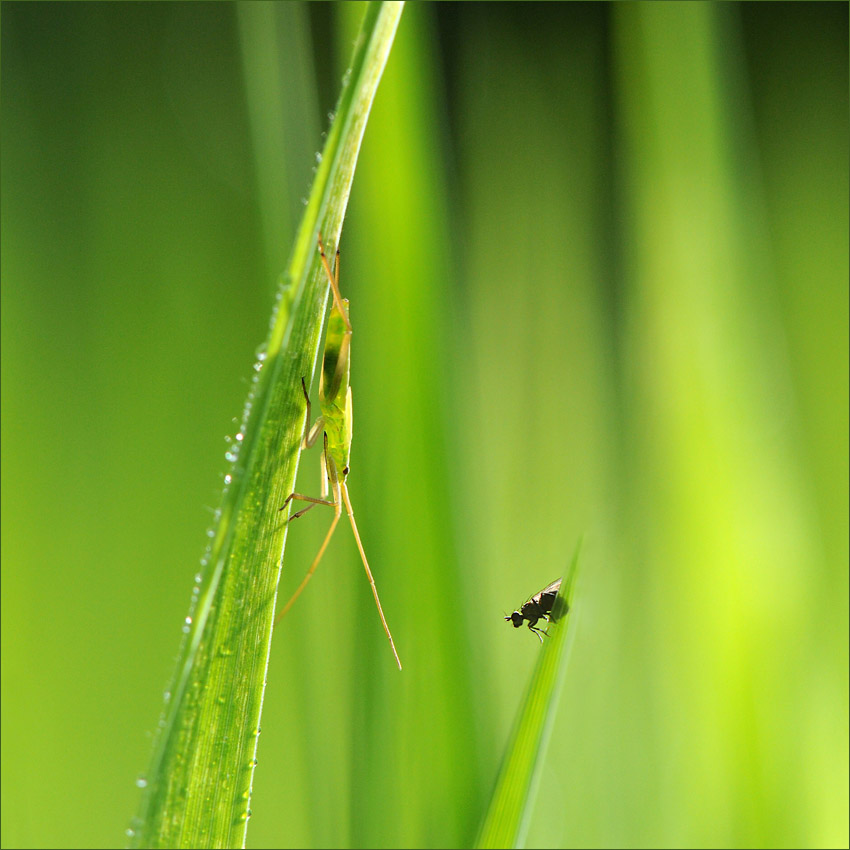 "photo ""The meeting"" tags: nature, insect"