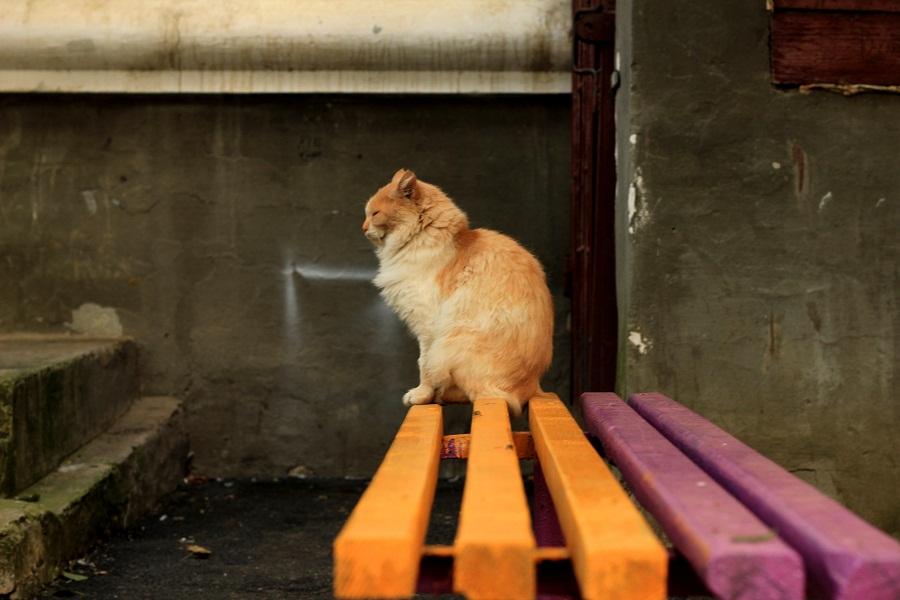 """фото """"Рыжий профиль"""" метки: природа, разное, домашние животные"""