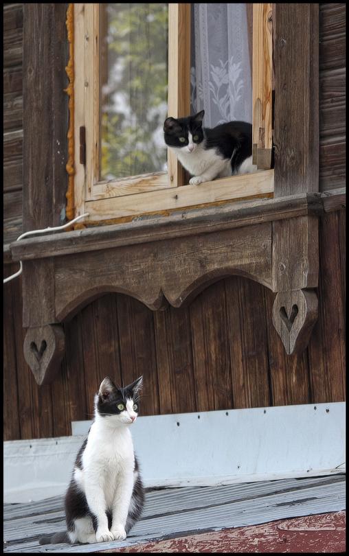 """фото """"Городские зарисовки..."""" метки: природа, домашние животные"""