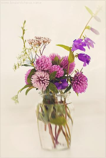 "фото ""Клевер"" метки: природа, натюрморт, цветы"