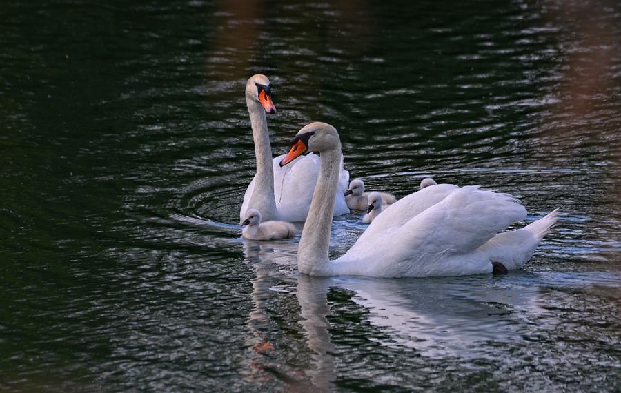 """фото """"Family"""" метки: природа, дикие животные"""