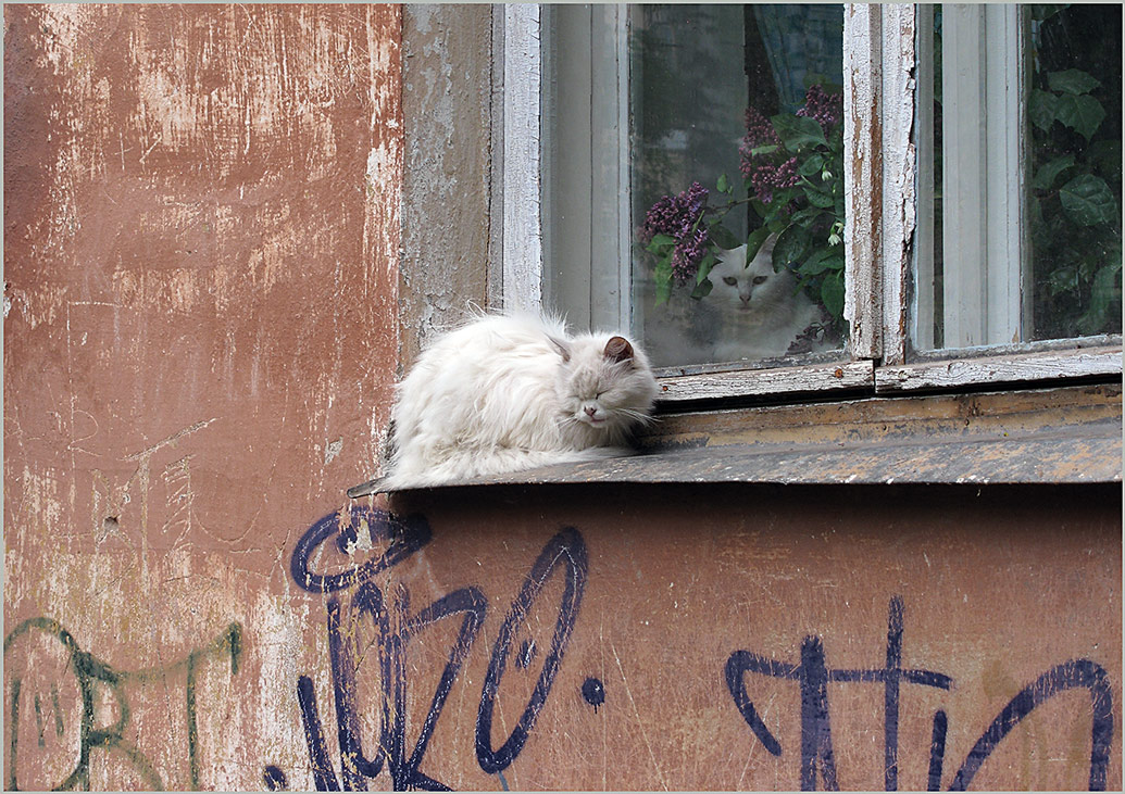 """фото """"Свидание под сиренью"""" метки: природа, домашние животные"""