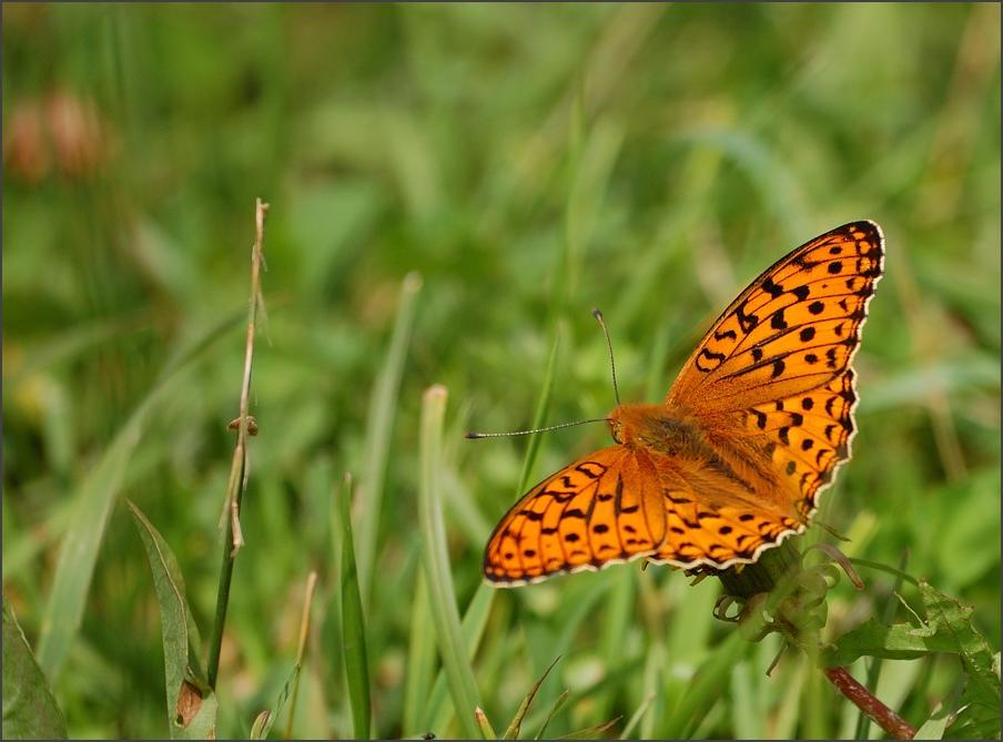 "photo ""At takeoff"" tags: macro and close-up, nature, insect"
