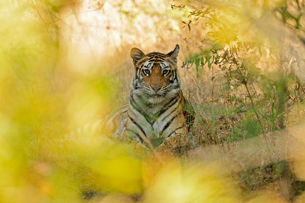 """фото """"Сквозь джунгли"""" метки: природа, дикие животные"""