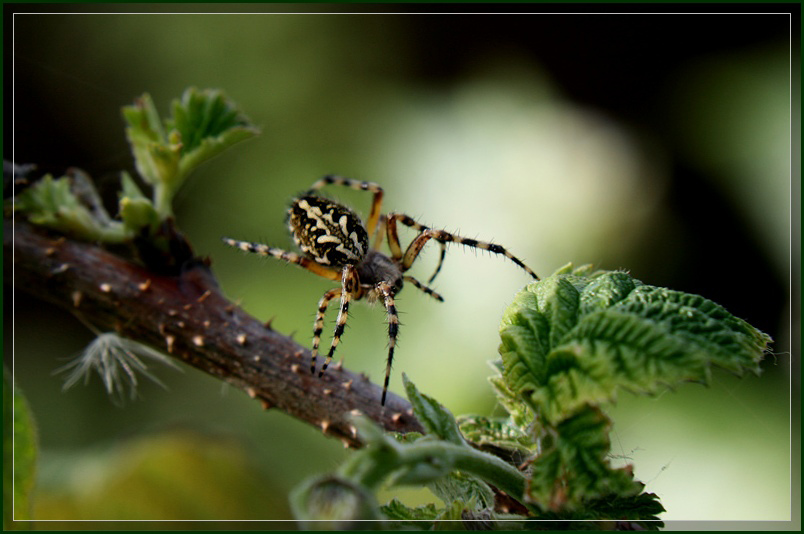 "photo ""Ballet"" tags: nature, macro and close-up, insect"