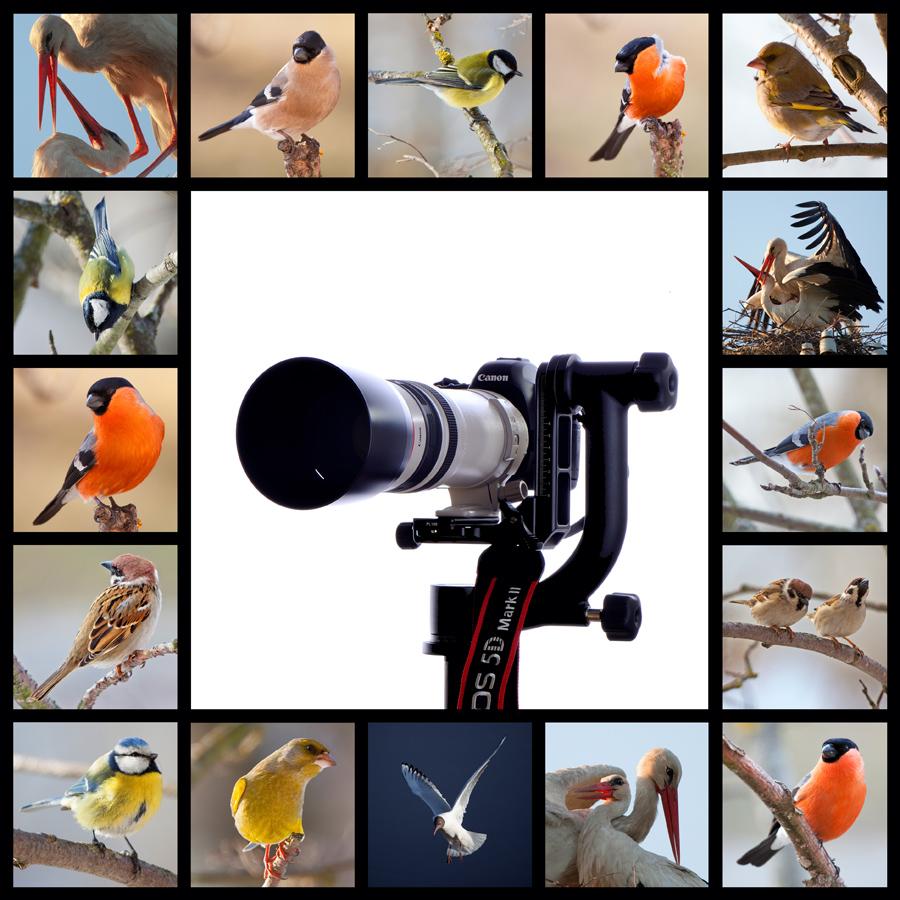 """фото """"Фотоохота"""" метки: природа, фотомонтаж, дикие животные"""