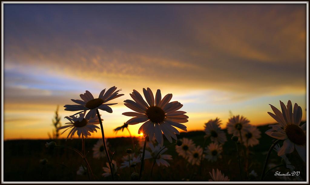 """фото """"Пробуждение"""" метки: пейзаж, природа, закат, цветы"""