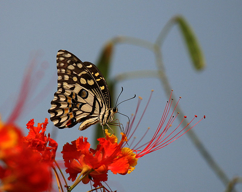 "photo ""Butterfly"" tags: nature, macro and close-up, insect"