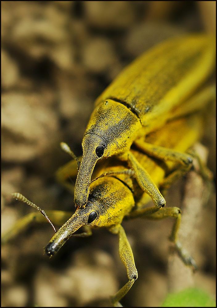 """фото """"Жизнь или кошелек....."""" метки: природа, макро и крупный план, насекомое"""