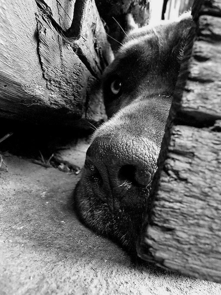 """фото """"Эх, хоть бы не забыли про меня....."""" метки: портрет, природа, домашние животные"""