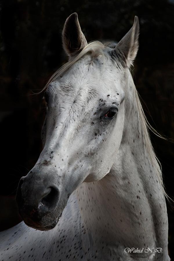 """фото """"Arabian beauty 1"""" метки: разное,"""