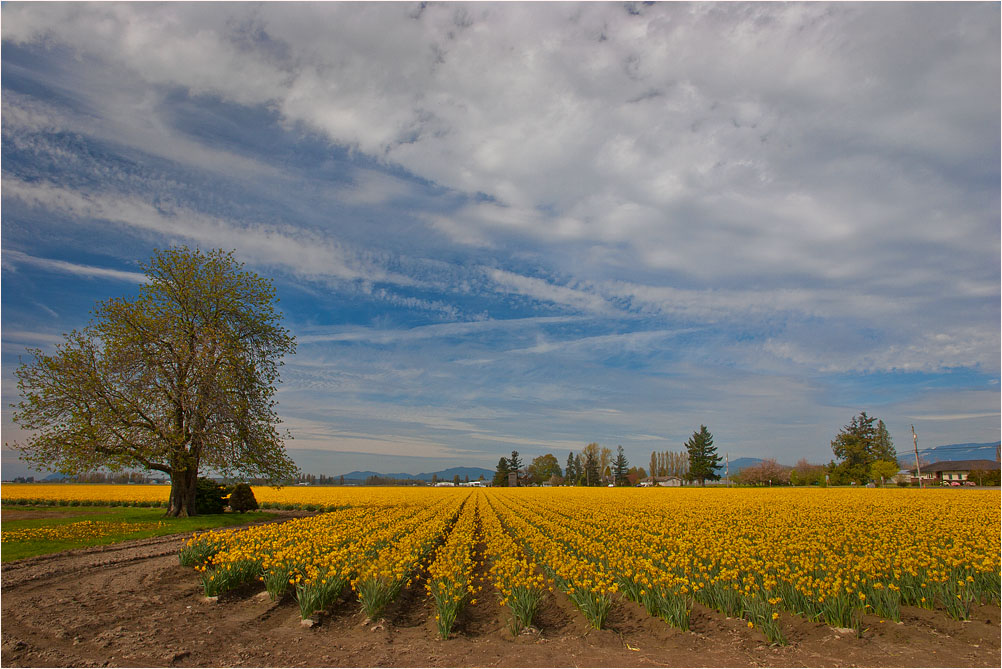 """photo """"***"""" tags: landscape, flowers, spring"""
