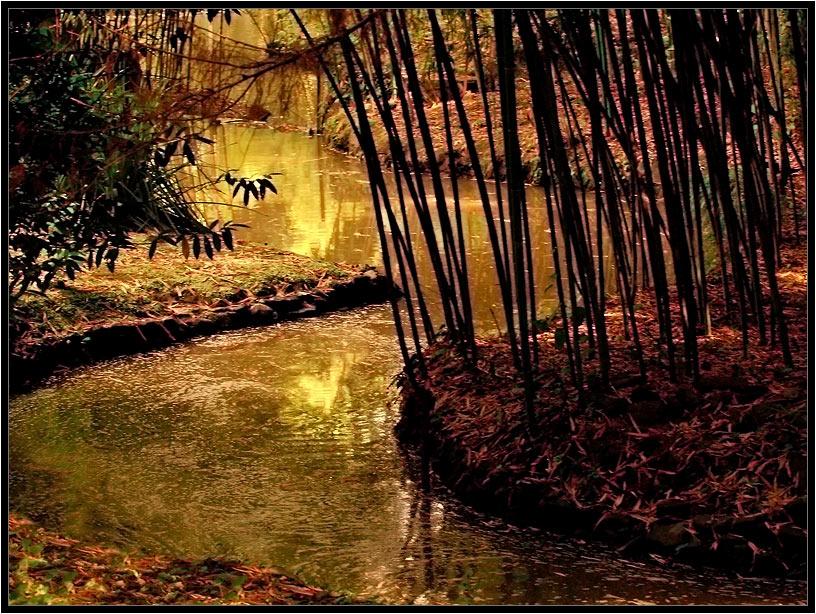 "фото ""Южный закат. Пруд с зарослями бамбука"" метки: пейзаж, закат"
