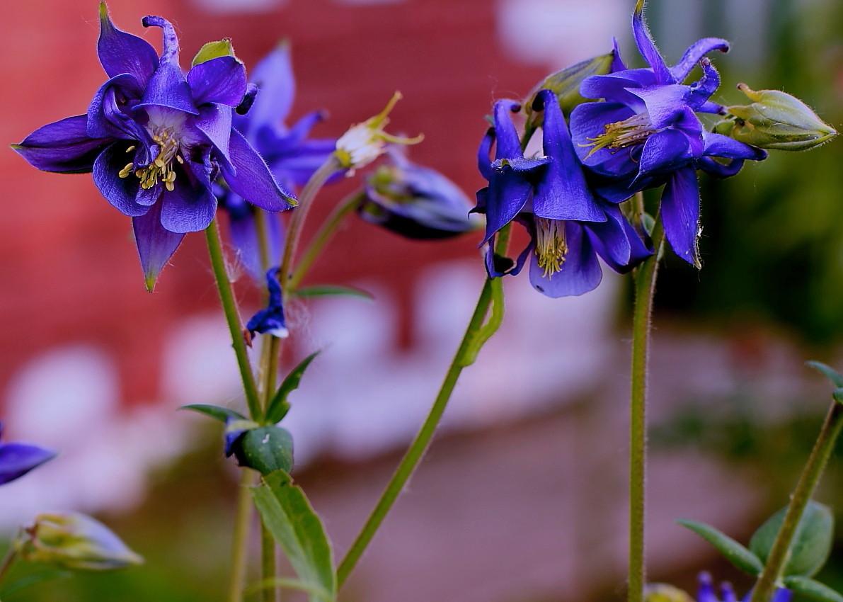 """фото """"Отвергнутый..."""" метки: природа, цветы"""