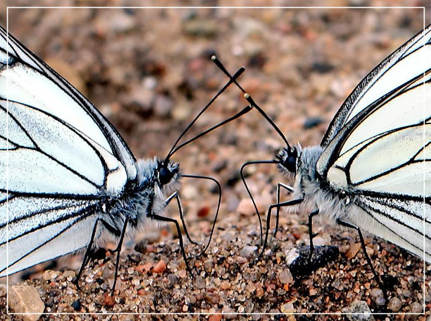 """фото """"Бабочки."""" метки: макро и крупный план,"""