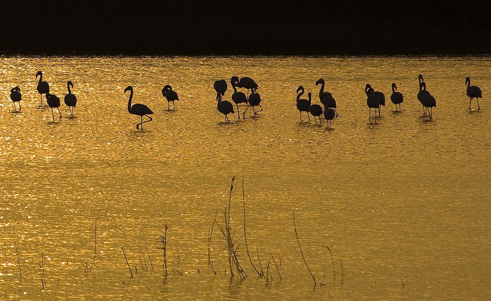 "photo ""Golden Silhouettes"" tags: landscape, nature, sunset, wild animals"