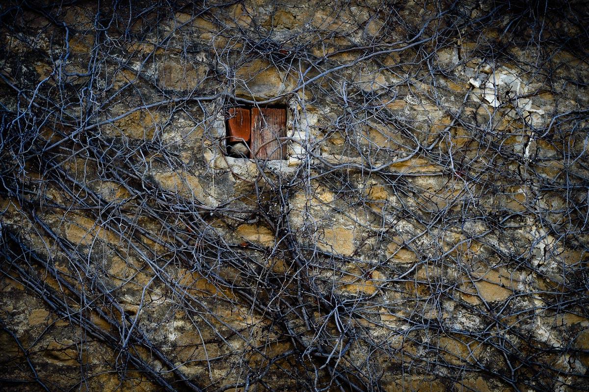 """фото """"***"""" метки: город, фрагмент, Европа, Кипр, абстракция, дерево, дом, корни, окно, стена, фактура, цвет"""