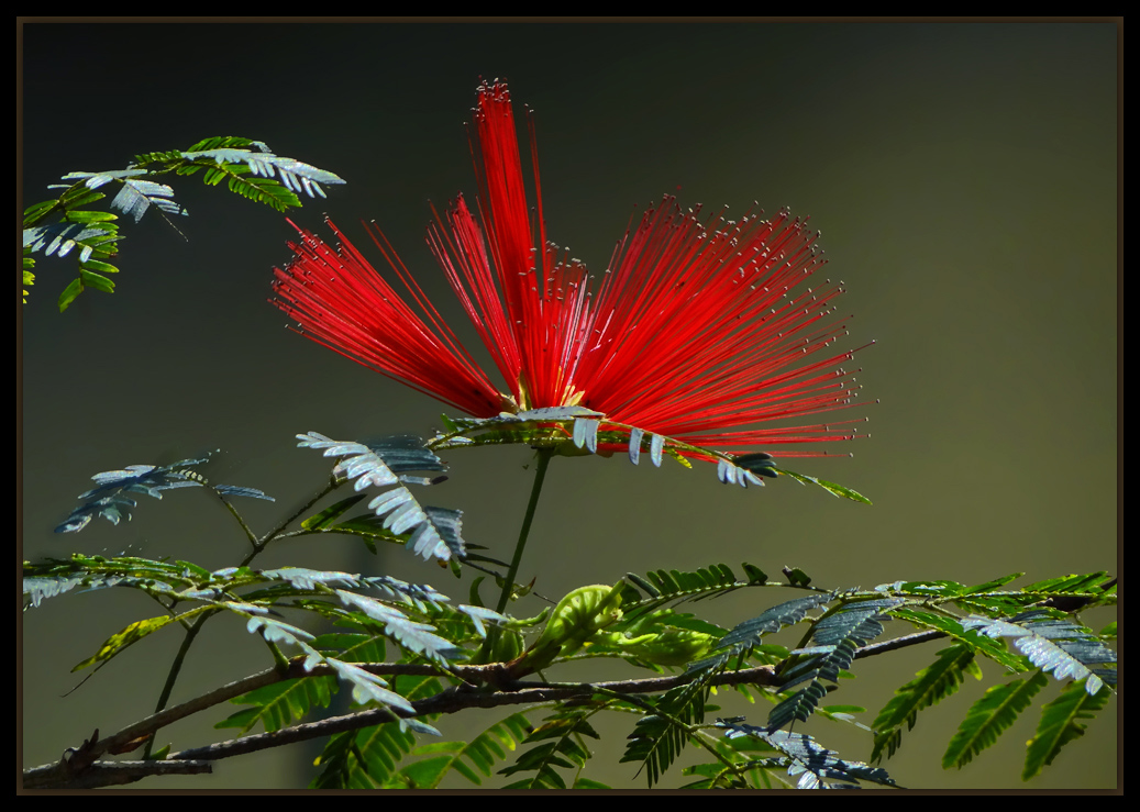 "фото ""Happy Birthday, dear Olga!"" метки: природа, цветы"