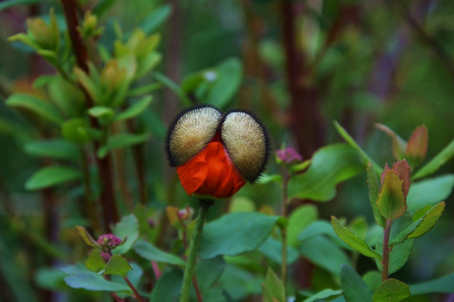 """фото """"Рождение цветка"""" метки: природа, цветы"""
