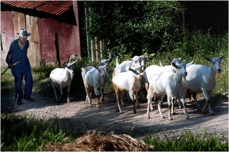 "photo ""селска идилия..."" tags: genre, nature, pets/farm animals"