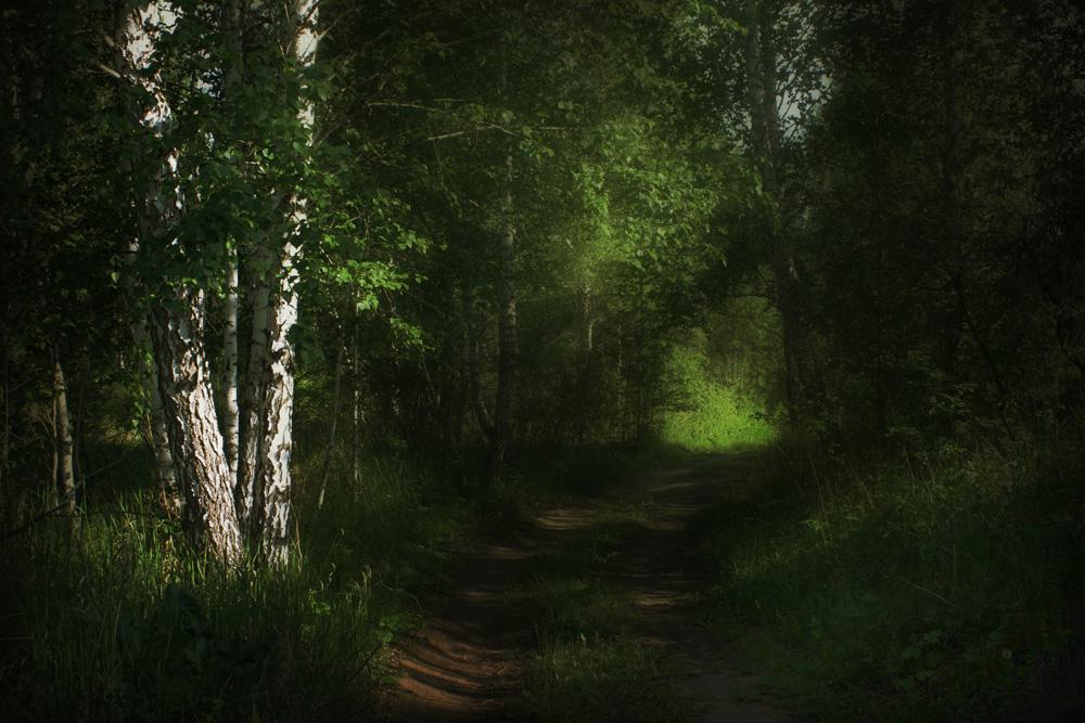 "фото ""***"" метки: пейзаж, лес, лето"