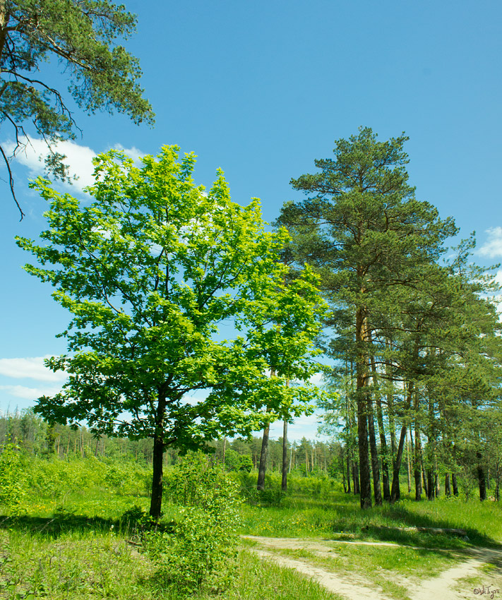 "photo ""***"" tags: landscape, forest, spring"