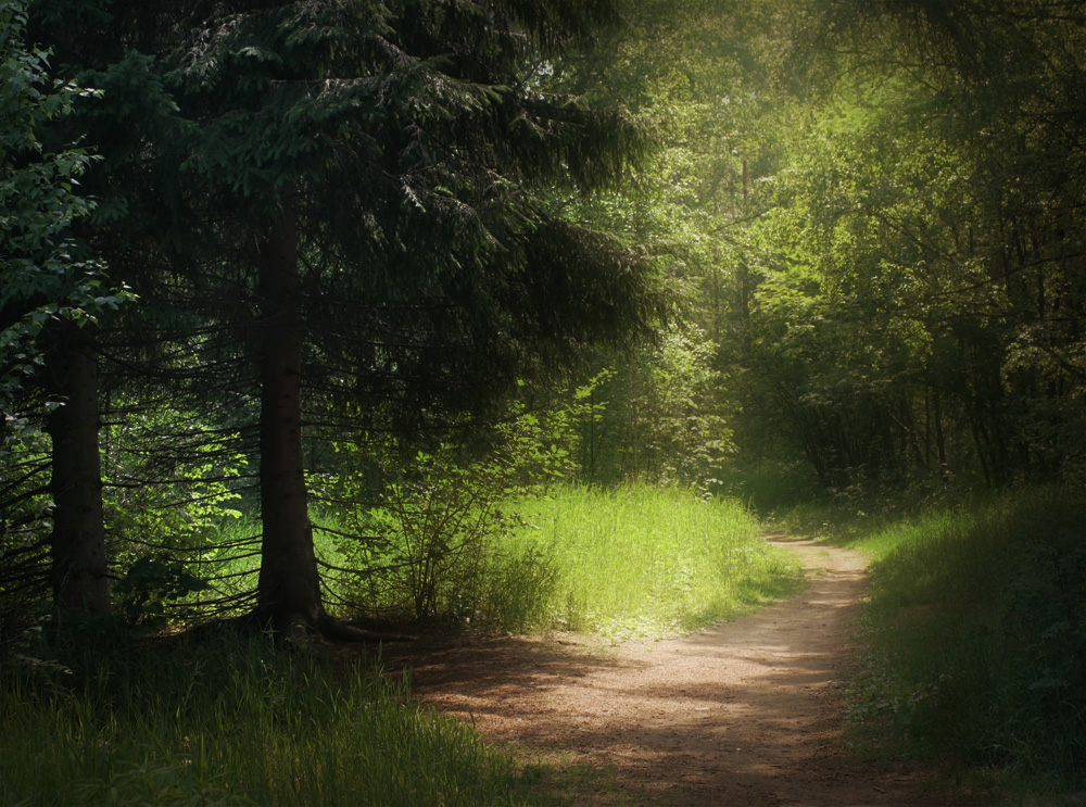 "photo ""***"" tags: landscape, forest, summer"