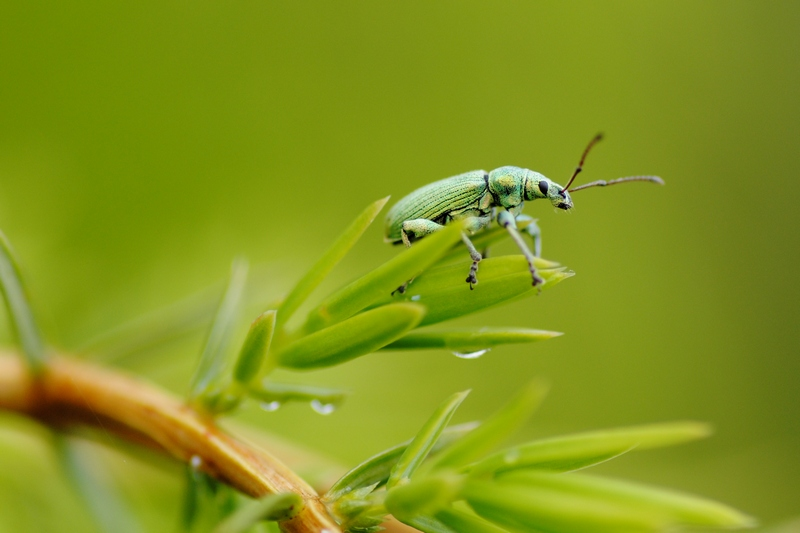 "photo ""***"" tags: nature, macro and close-up, insect"