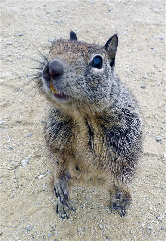 """photo """"Gimme the nuts!"""" tags: nature, humor, wild animals"""