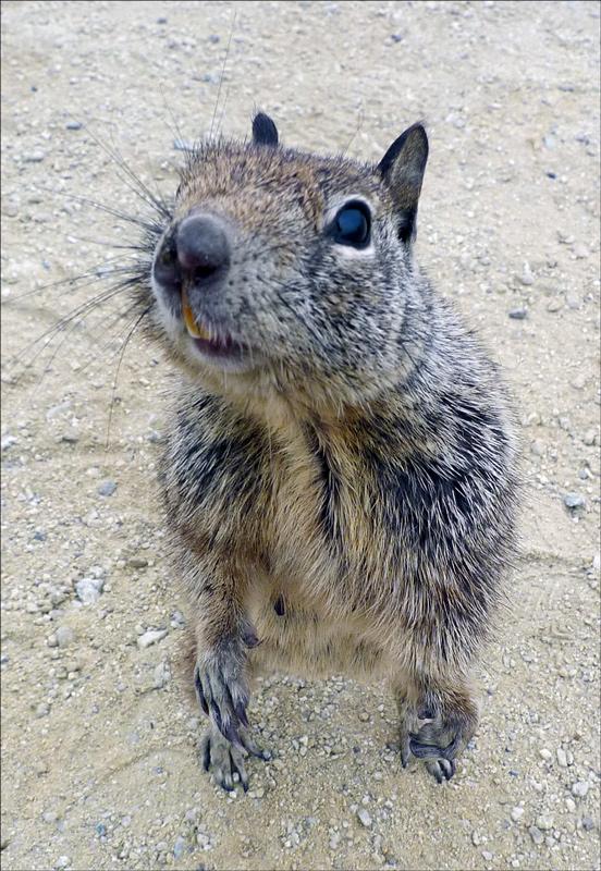 """фото """"Дай орехов!"""" метки: природа, юмор, дикие животные"""