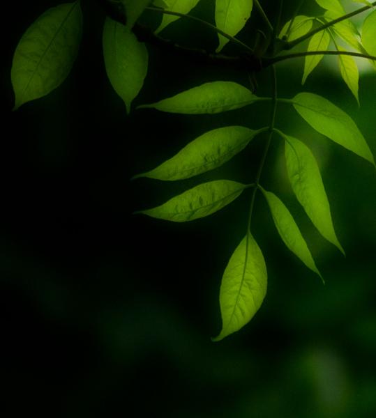 "фото ""try a little tenderness"" метки: природа, цветы"