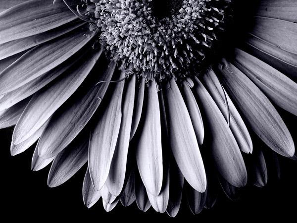 """фото """"el final de tu y yo"""" метки: природа, цветы"""