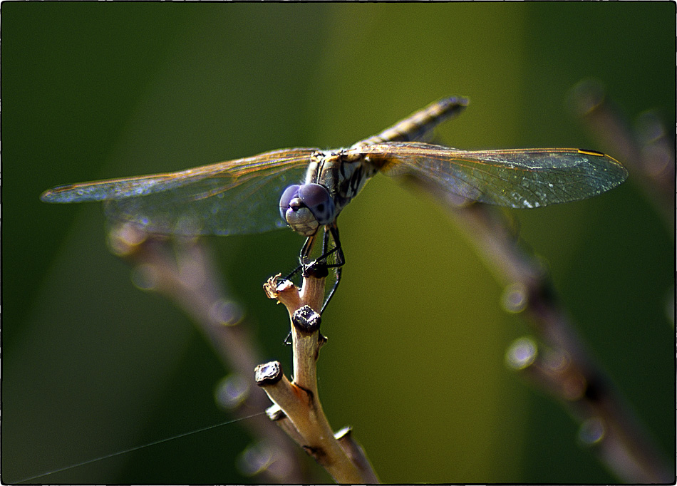 "photo ""dragonfly"" tags: nature, macro and close-up, insect"