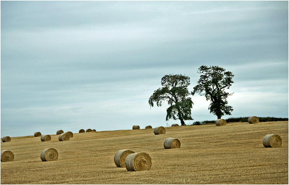 """фото """"Тогда была осень..."""" метки: , дерева"""