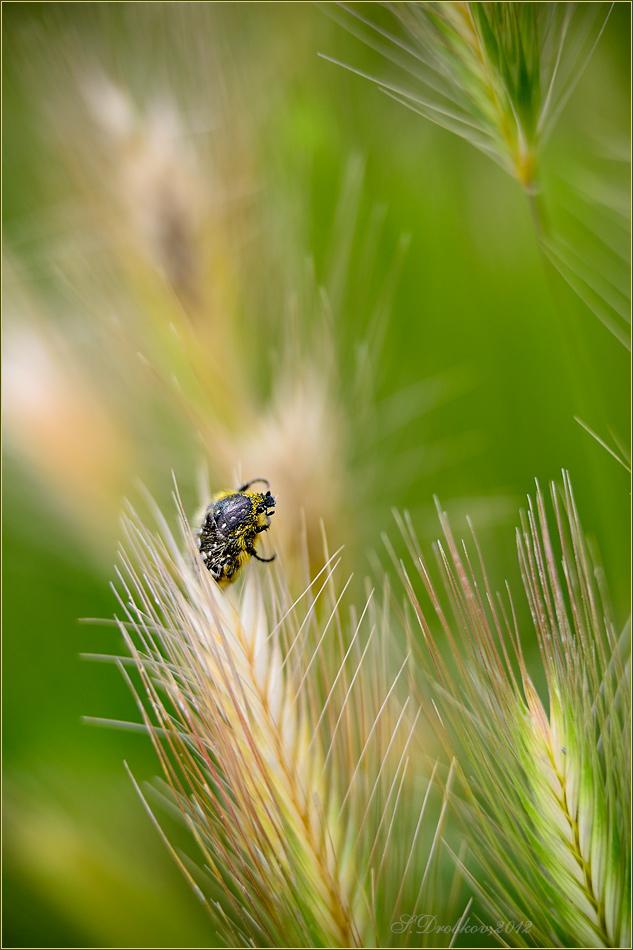 """photo """"Hacia el sol"""" tags: nature, macro and close-up, insect"""