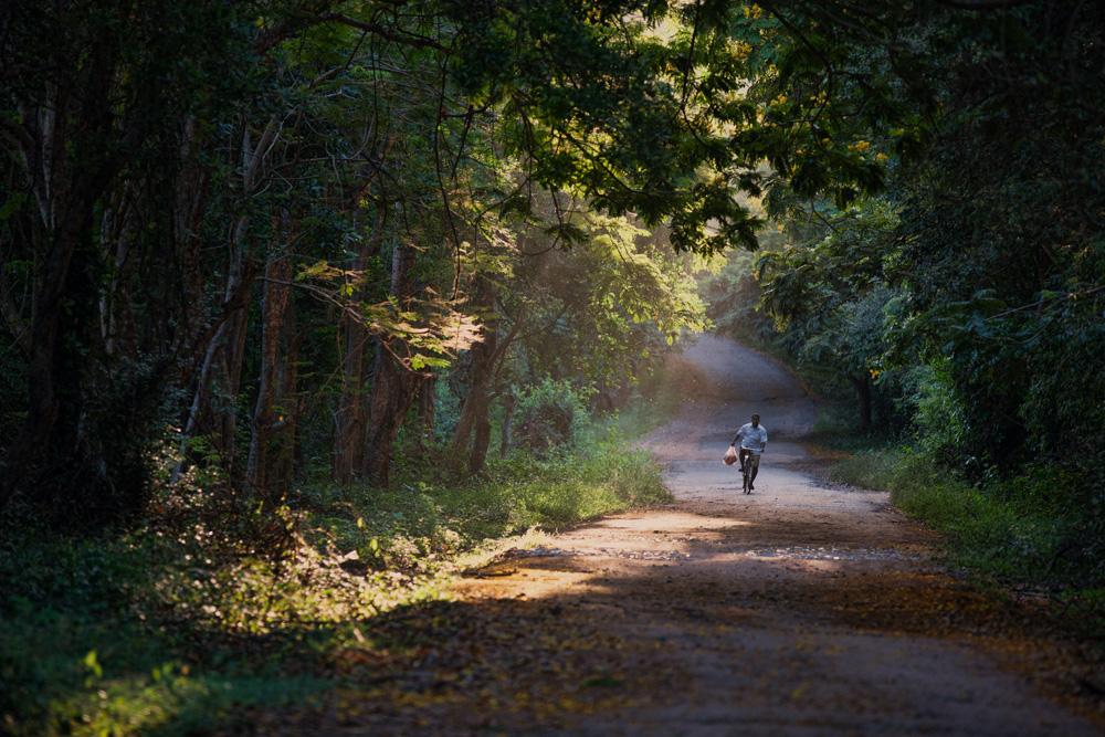 """фото """"Сигирия"""" метки: пейзаж, лес"""