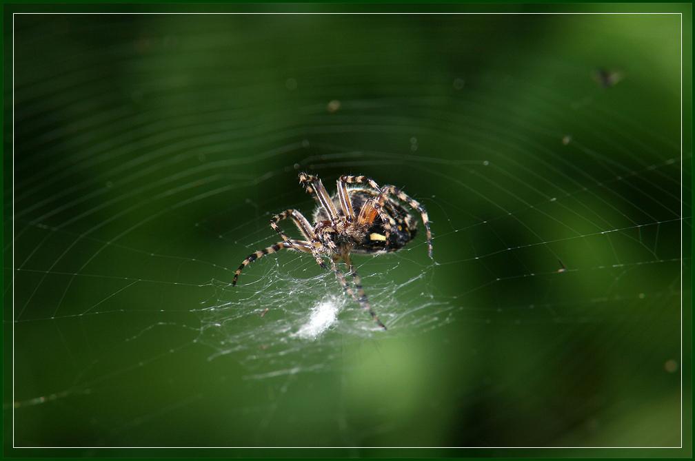 """фото """"Галактика"""" метки: природа, макро и крупный план, насекомое"""