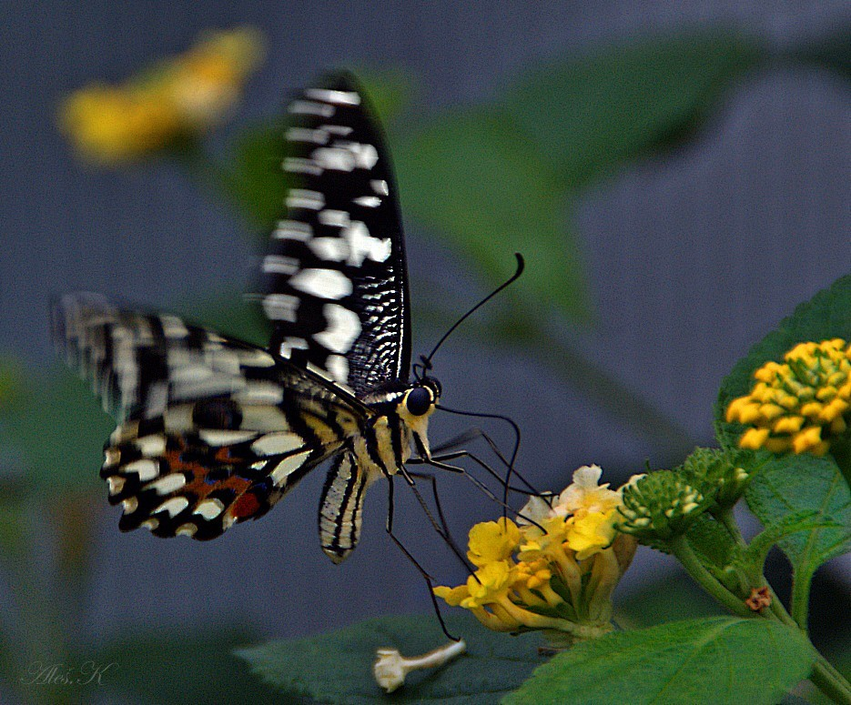 """photo """"landing"""" tags: nature, insect, wild animals"""