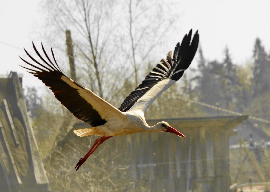 """фото """"Полёт над деревней"""" метки: природа, дикие животные"""