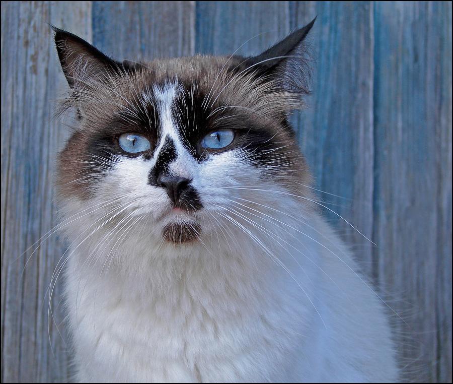 "photo ""Marquis Bologoevsky"" tags: portrait, nature, pets/farm animals"