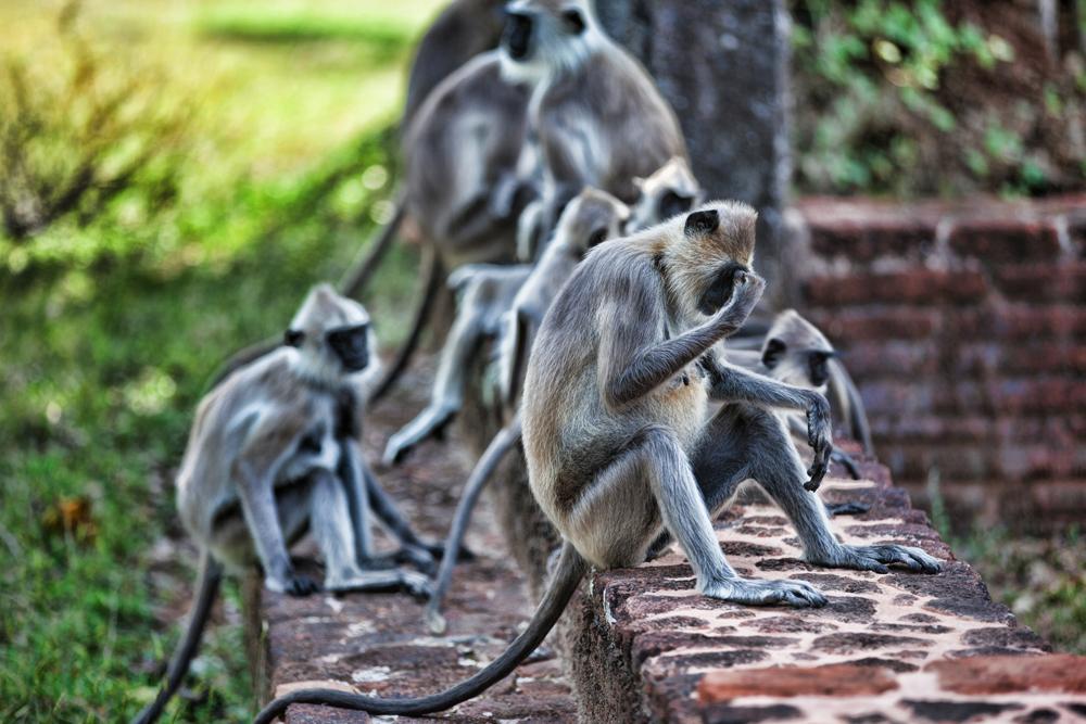 "photo ""***"" tags: travel, nature, Asia, wild animals"