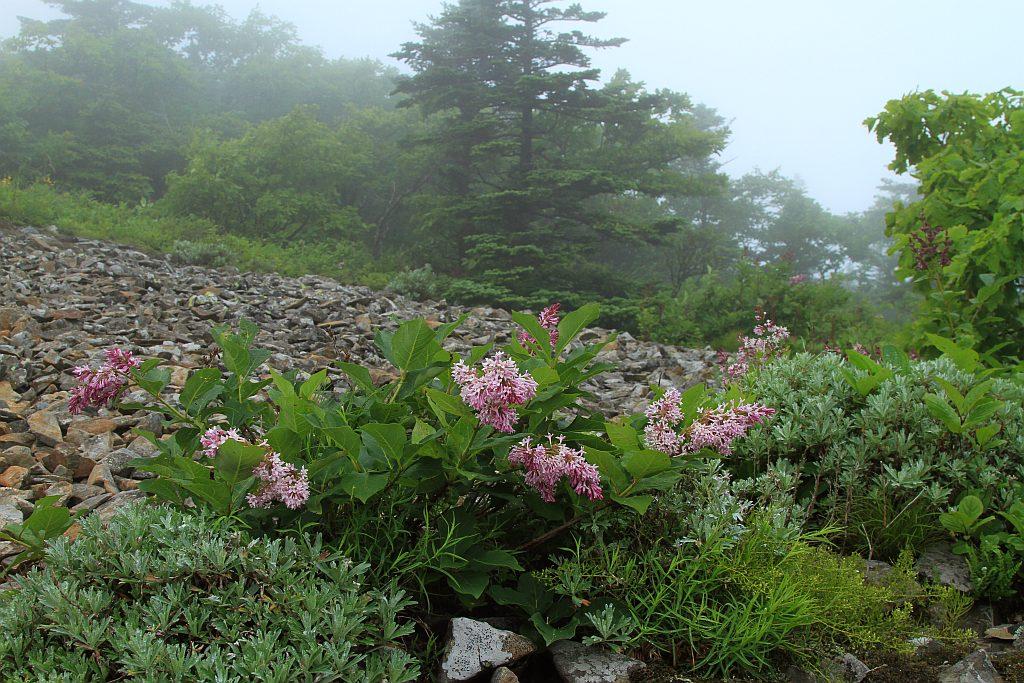 "фото ""Туман на высоте 840 метров."" метки: ,"