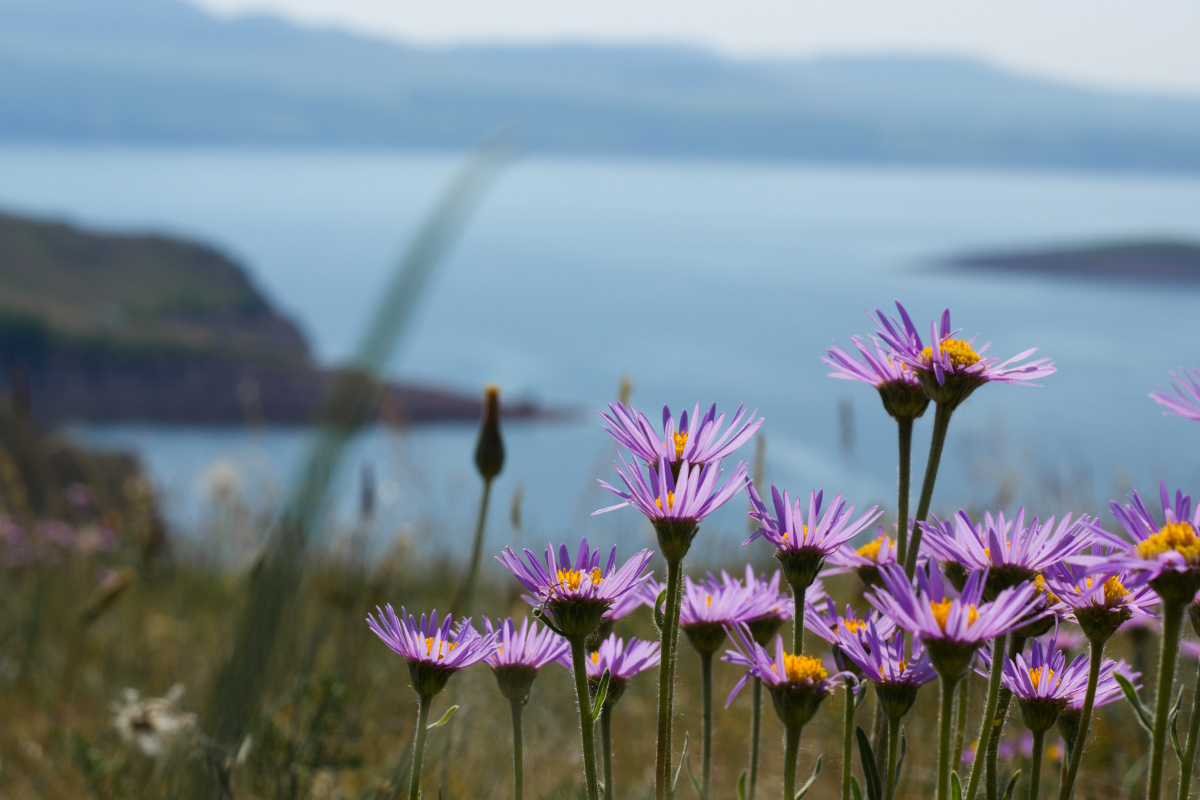 "photo ""Purple daisies"" tags: landscape, mountains, water"