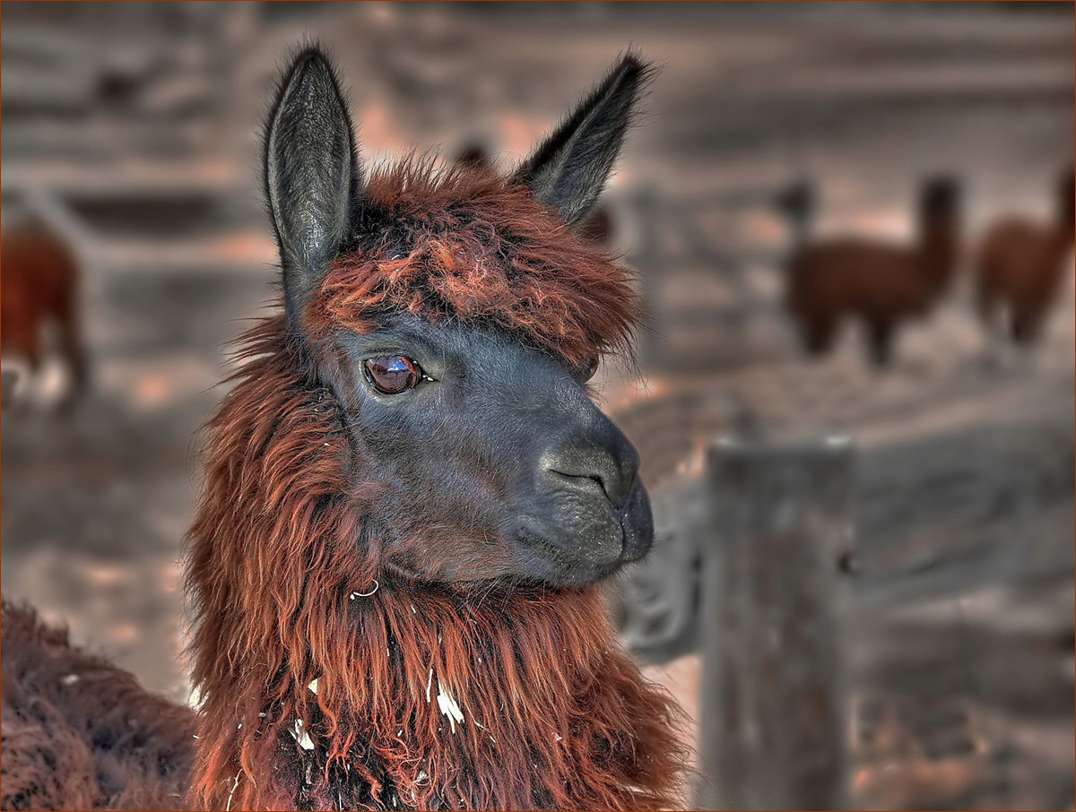 "photo ""Border Guard"" tags: travel, nature, pets/farm animals"