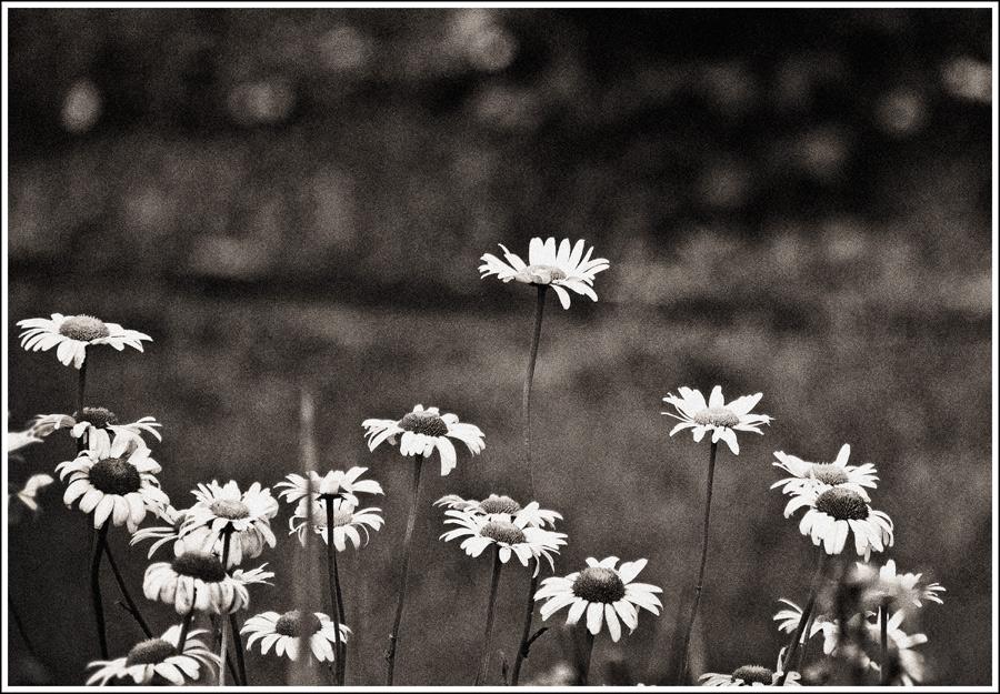"photo ""***"" tags: black&white, nature,"